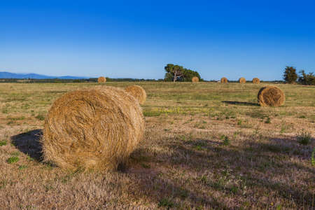 Hay Bales on a field in the Tuscany Italy - nature background Zdjęcie Seryjne