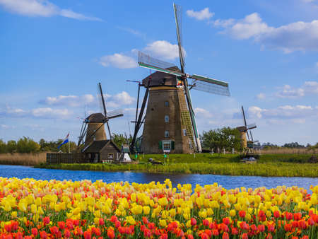 Windmills and flowers in Netherlands - architecture background Banco de Imagens