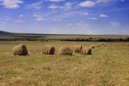 tillable: Packad hay bales spread on the fields of countryside