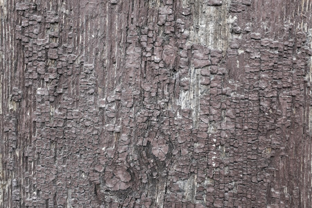 cracky: Cracky wooden bark as colorful background Stock Photo