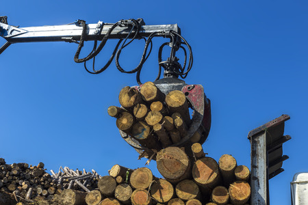 Timber logs being loaded on truck by crane in sawmill Banco de Imagens