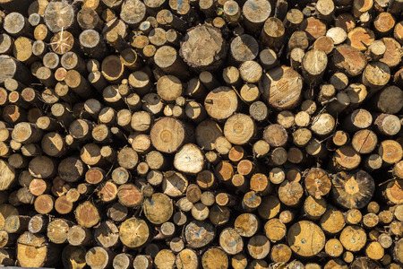 sawmill: Wooden background of cut timber logs in sawmill
