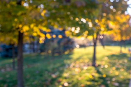seasonal: Autumn seasonal nature, blurred background Stock Photo