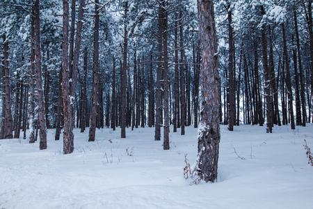 heavy snow: Winter landscape of frozen woods with heavy snow