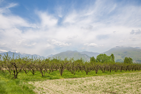 Cultivated farmland with fruit trees Banco de Imagens