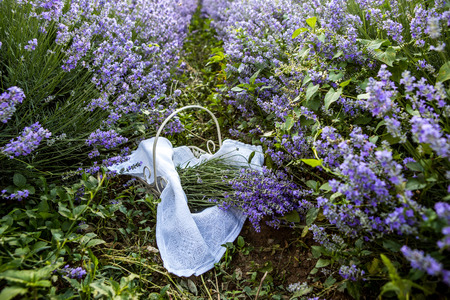 perfumery concept: Basket with fresh flowers in the fields of nature
