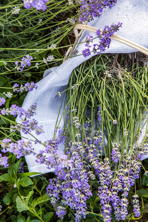 perfumery concept: Closeup of fresh lavender flowers, vertical background