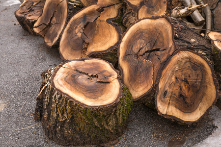 solid: Cut solid wood stumps arranged in stack