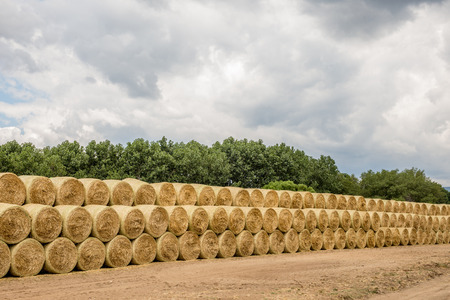 hay bales: Numerous hay bales arranged in stacks