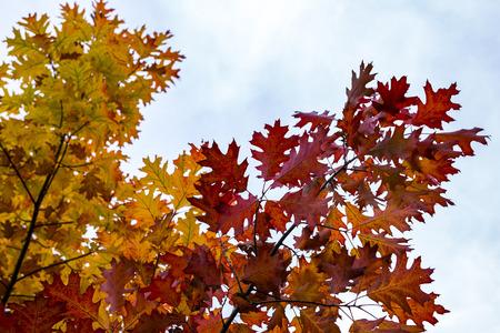 pallette: Gros plan de feuilles colorées sur fond défocalisé