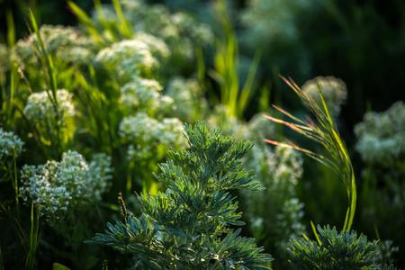 springbreak: Closeup of fresh green flowers, gardening concept
