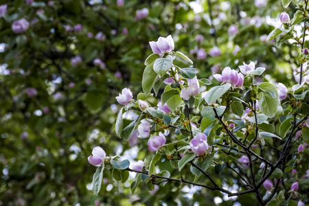 perfumery concept: Closeup of bloomy flowerets of a tree, selective focus Stock Photo