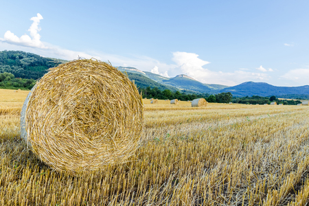 tillable: Agricultural farmland of rolled hay bales  Stock Photo