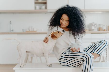 Delighted curly woman with cheerful expression poses with jack russell terrier dog at home, drinks aromatic beverage, dressed in white sweater and striped pants, sit in kitchen. Lady petting puppy Фото со стока - 144706993