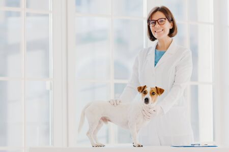 Full checkup and diagnostic. Positive skilled female vet in white uniform examines jack russell terrier dog in own clinic, writes down prescription, has animals as patients, cures various diseases.
