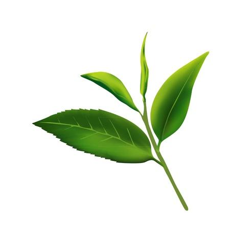 tea leaves Illustration