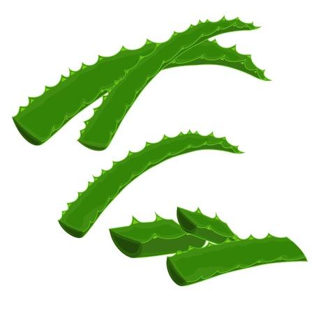 agave: Las hojas enteras de una planta de aloe vera y el corte de una pieza Vectores