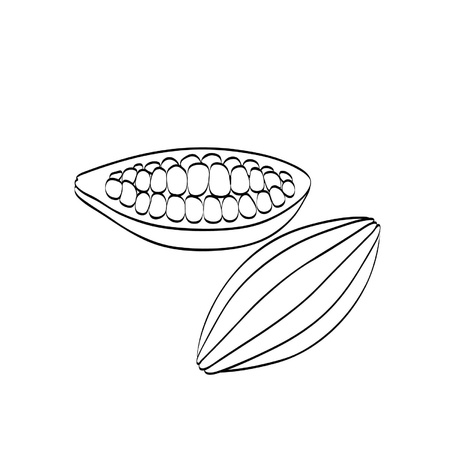pod: Cocoa beans on a white background