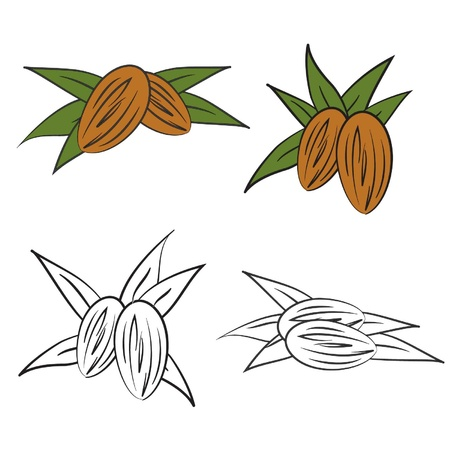 Almond with leaves  Vector Stock Vector - 13216611