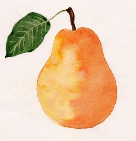 梨、水彩画 写真素材