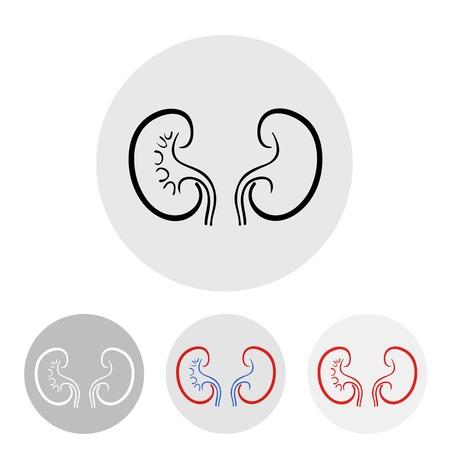 kidney stones: human kidneys on a light illustration. Illustration