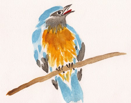 watercolor drawing of cute bird on a branch photo