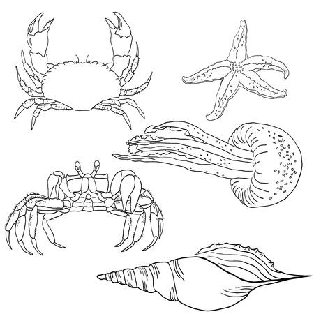 Vector set of sea fauna: starfish, jellyfish, crab, shell.
