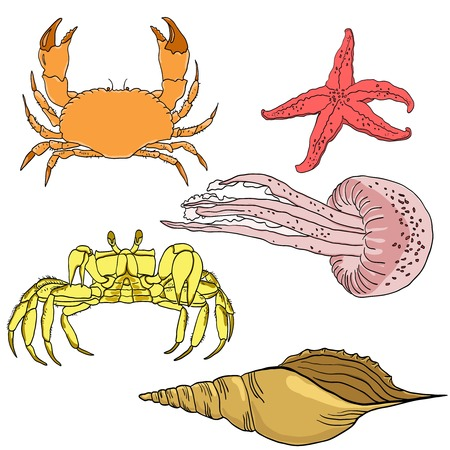 seafoods: Vector set of sea fauna: starfish, jellyfish, crab, shell.