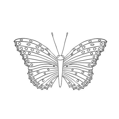 milkweed: butterfly isolated on white background Illustration
