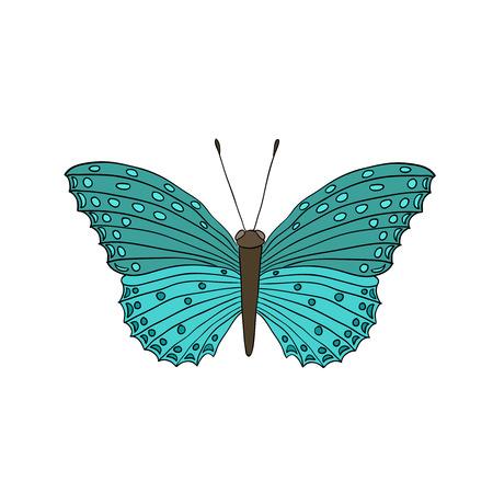 milkweed: cartoon butterfly, isolated on white background Illustration