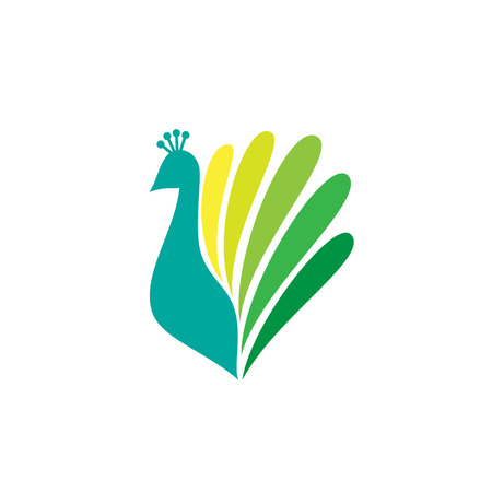 peacock feathers: Colored stylized silhouette of a peacock on a white background Illustration
