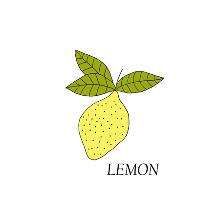 citric: Hand drawn illustrations of yellow lemon on a white background