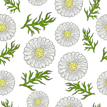 daisyflower: Pattern with camomile and leaves hand drawing. Daisy flowers.