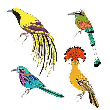 birds of paradise: Set of tropical birds . Emperor Bird of Paradise, royal flycatcher, Lilac-breasted Roller and Turquoise-browed motmot on a white background.