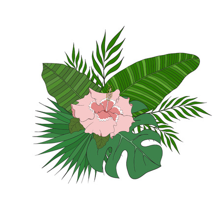 fuschia: The set of leaves of different species of palm trees and hibiscus flower on a white background.