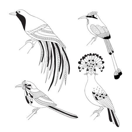 ave del paraiso: Conjunto de pájaros tropicales drenaje de la mano. Emperador ave del paraíso, mosquero real, Lila rodillo de pecho y pájaro de reloj sobre un fondo blanco.