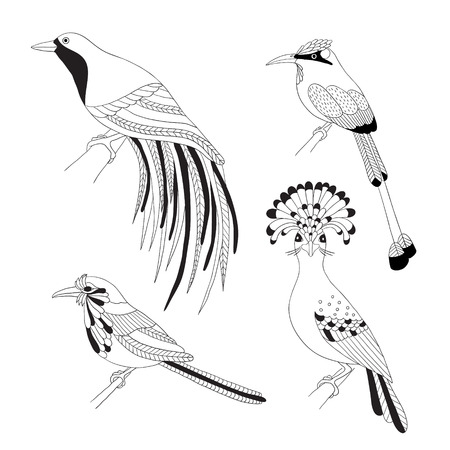fauna: Set of tropical birds hand draw. Emperor Bird of Paradise, royal flycatcher, Lilac-breasted Roller and Turquoise-browed motmot on a white background.