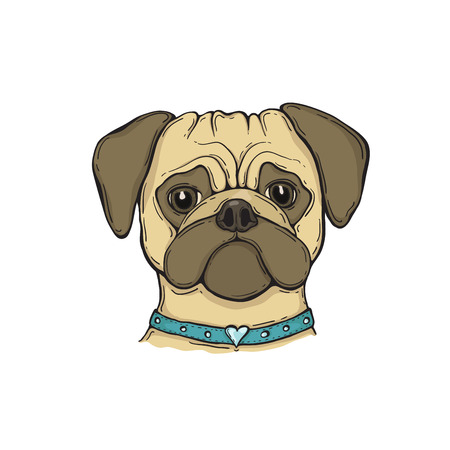 Head Dog pug with the collar, hand-painted portrait. For tshirt, poster, card