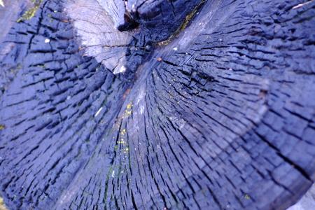 truncated: Stump is fire