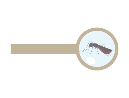mosquitos: mosquito under the lens