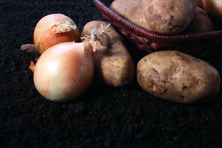 Autumn. Onions and potato harvesting. An onions and a potato in a basket on the soil.