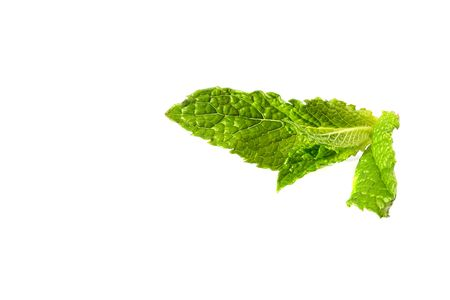pharmaceutics: Green branch of mint on white background. It is used in cookery and pharmaceutics.
