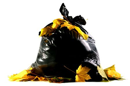 Autumn maple leaves against a full black plastic bag with dust. Stock Photo