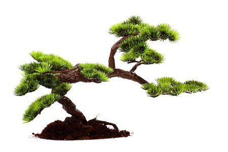 Small tree in traditional Japanese style bonsai. Stock Photo