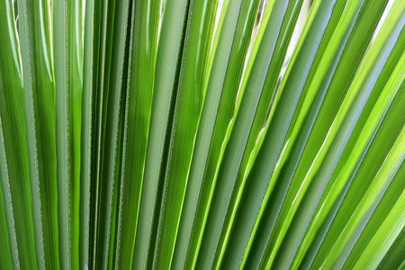As a background - a green branch of a palm tree.