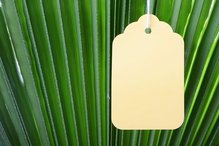 The branch of a palm tree as a background on which hangs a label. photo