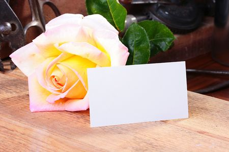 The large it is yellow a pink rose in a workshop on a working workbench with an empty piece of paper for placing on it of a congratulation or messages. Stock Photo