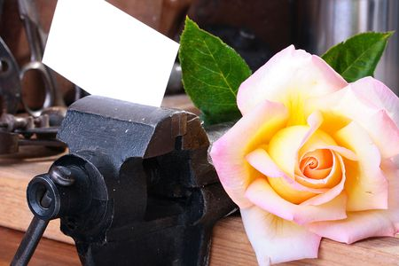 Business card is fixed in a vice on a workbench with a rose as a congratulation or a reminder.