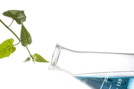 Green leaves next to an erlenmeyer flask with blue liquid in it.