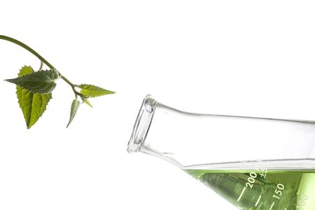 beakers: Green leaves next to an erlenmeyer flask with a green liquid in it.